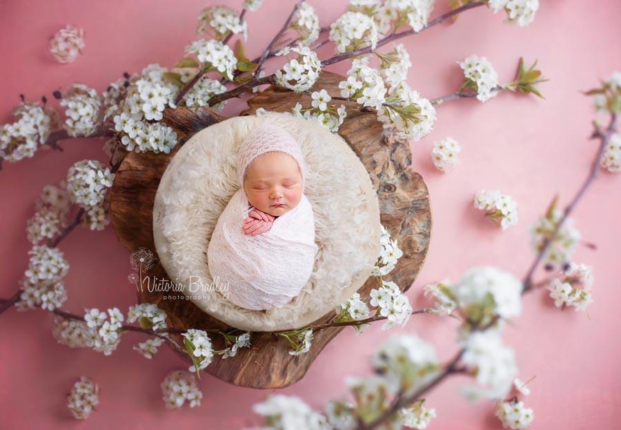 blossom, pink, white, newborn baby