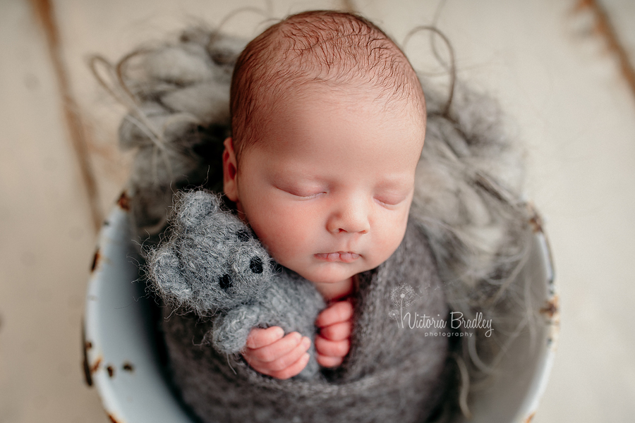 wrapped newborn baby photography, baby in bucket, with grey teddy and grey wrap on cream wooden floor